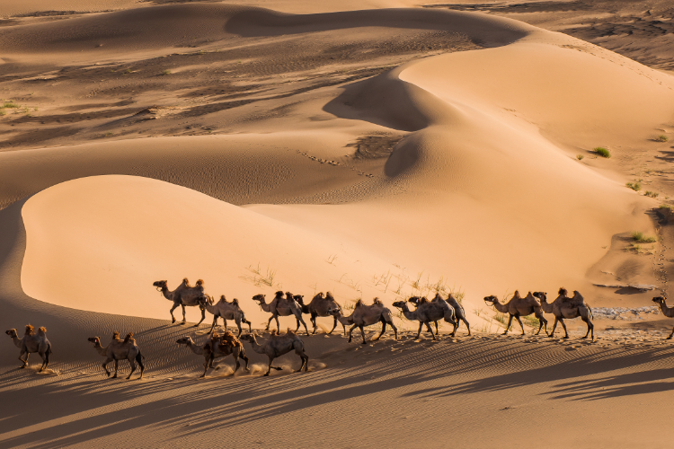 - Die Wüste Gobi